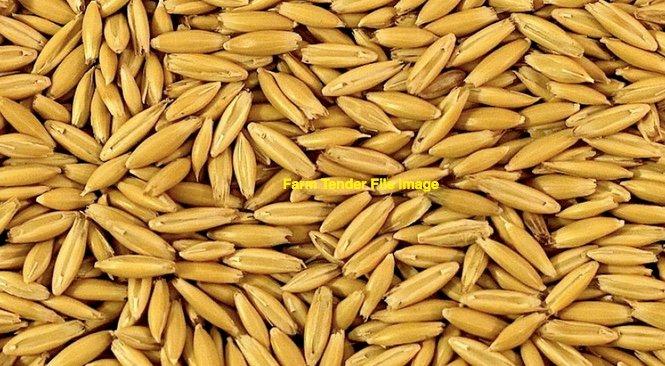 20-25mt Yallara Seed Oats