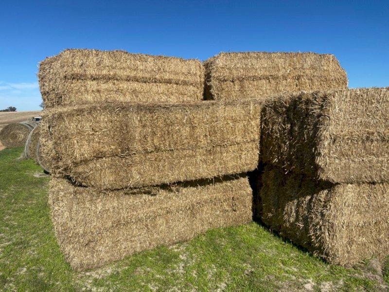 Barley Straw 8x4x3 Bales