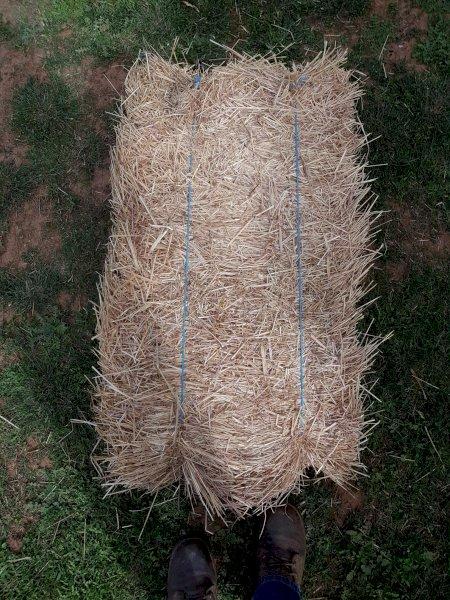Oaten/Rye  Grass Hay