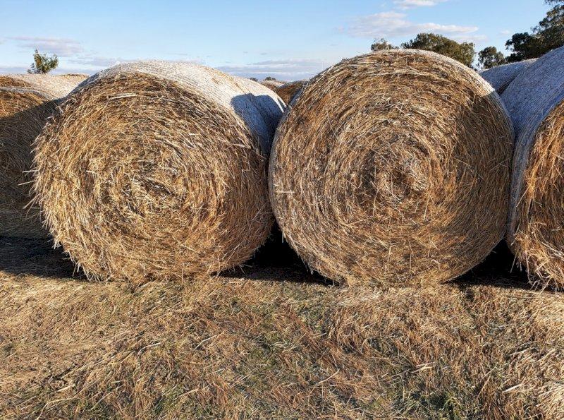 500 x Organic Wheat/Rye Hay 450kg 5x4 Rolls