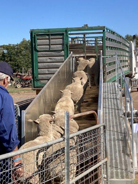 8 Metre Mobile Sheep Ramp