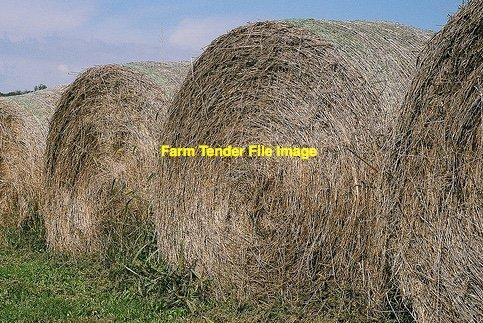 Katambora  Rhodes grass Rolls