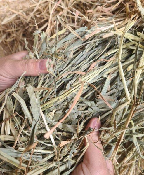 1800 x Wheaten Hay in Bale Baron packs of 21