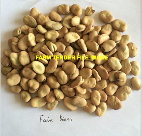 5mt Faba Bean Seed
