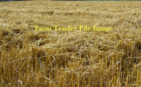 Wheaten Straw 8x4x3 Bales. 120 Bales available