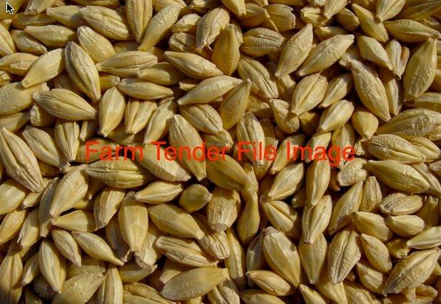 34m/t of Sterilized Barley Seed