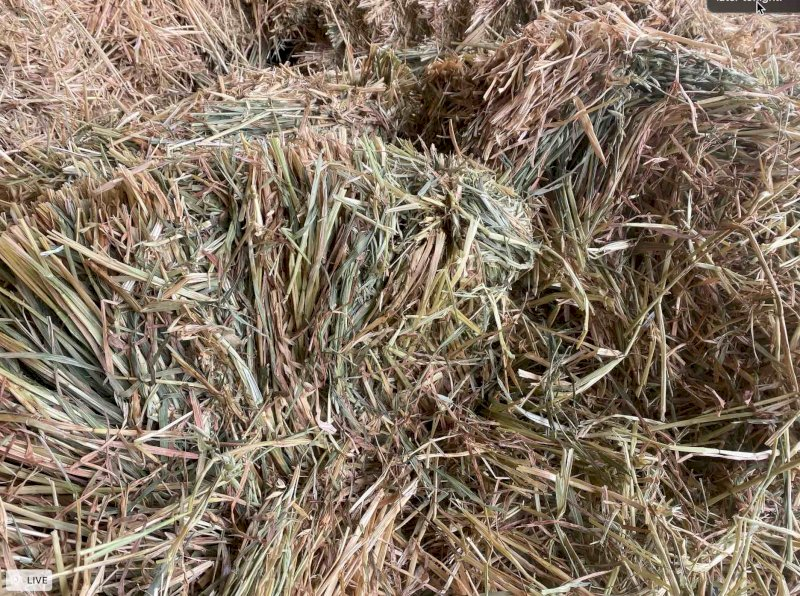 Horse Quality Small Square Oaten Hay