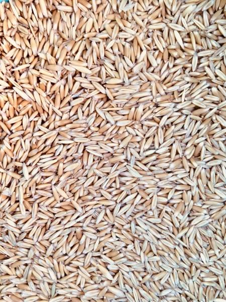 20mt Yarran Seed Oats