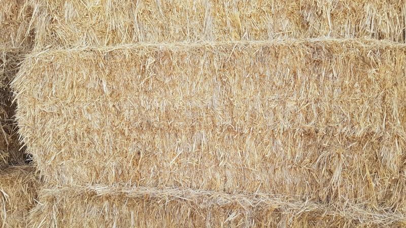 Large squares Organic Hay