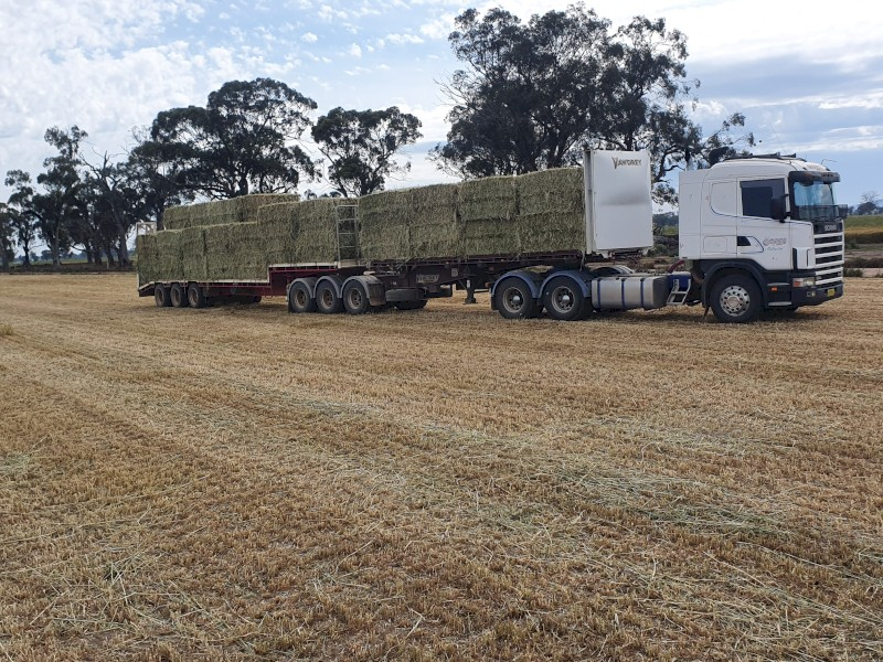 Oaten Silage with a trace of vetch