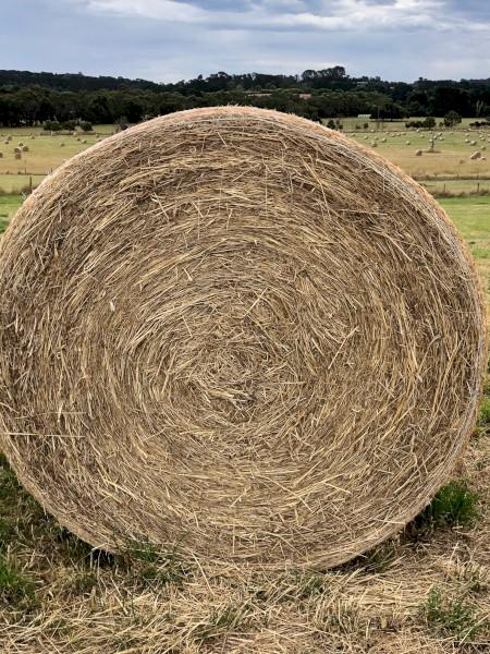 100 x Good Quality Pasture Hay (5x4 Rolls)