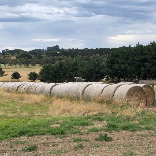 100 x Pasture Hay (5x4 Rolls)