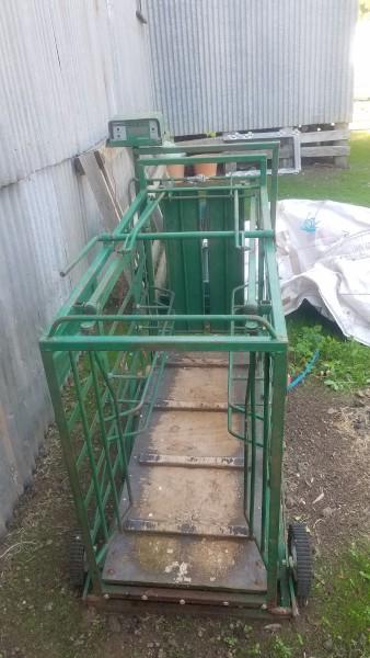 Ruddweigh Sheep Weigh Crate