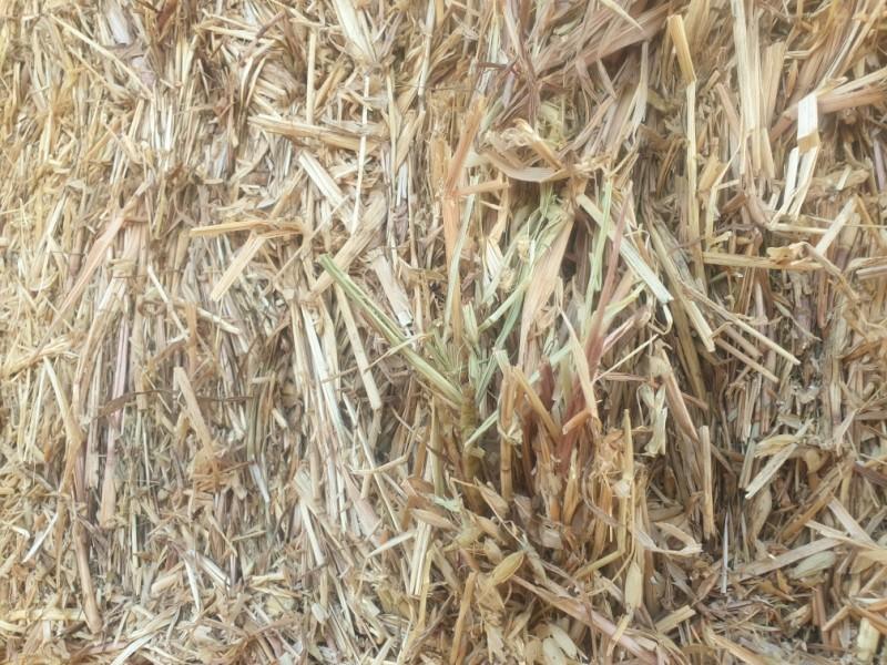 Oaten Hay 8x4x3 Bales, $60 bucks per tonne, way better value than straw