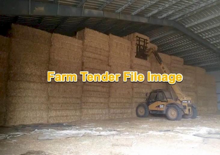 2000mt Barley Straw 8x4x3 Bales Shedded