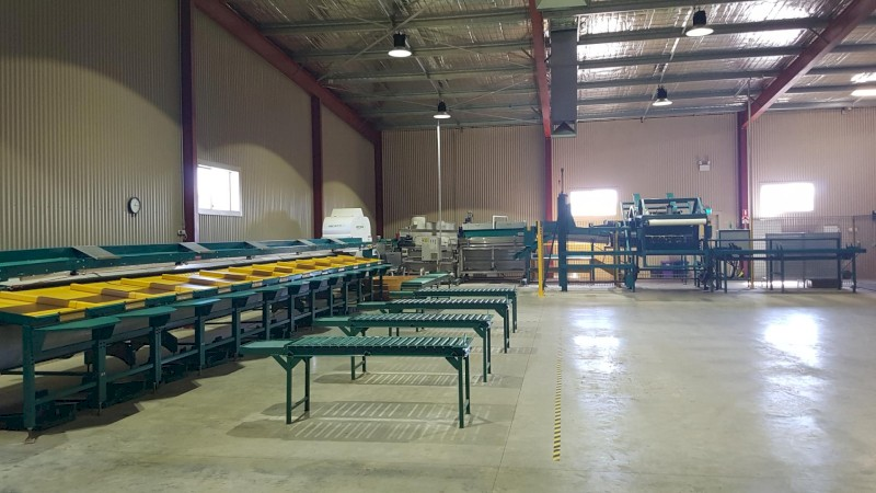 Pianokey Fruit and Vegetable Grader for Sale