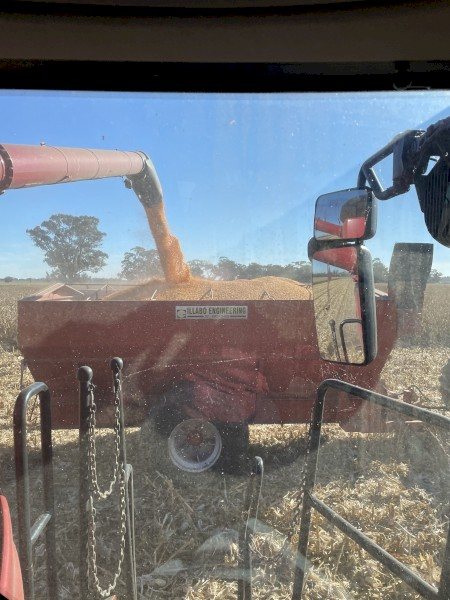 250t Feed Corn + Freight