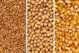 WANTED Organic, Wheat, Corn, Sorghum, Sunflower, Millets etc for Poultry/Bird Feed