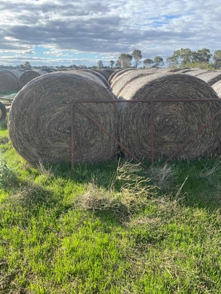 Oats And Pasture Hay