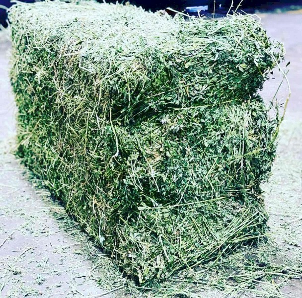 WANTED Prime Steamed Quality Lucerne Hay