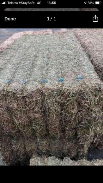 New Season Shedded Vetch Hay 8x4x3 500-550kg Bales + Freight