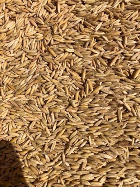 Semi load milling oats