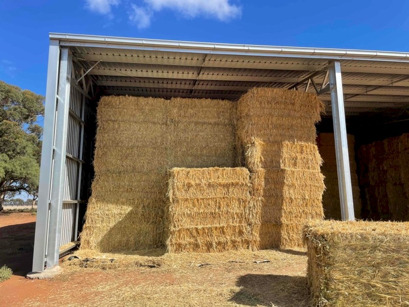 Export Quality Shedded Oaten Hay