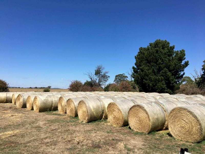 Ryegrass Rolls