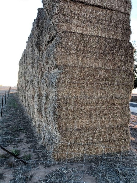 Balansa Clover Hay - No Rain Damage