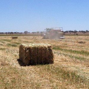 Warrick Hay & Grain - Hay, Grain & Storage