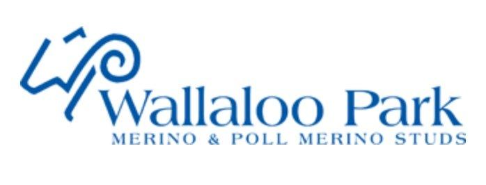 Wallaloo Park Merino & Poll Merino Stud